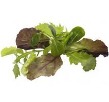Baby leaf sla 250 gram